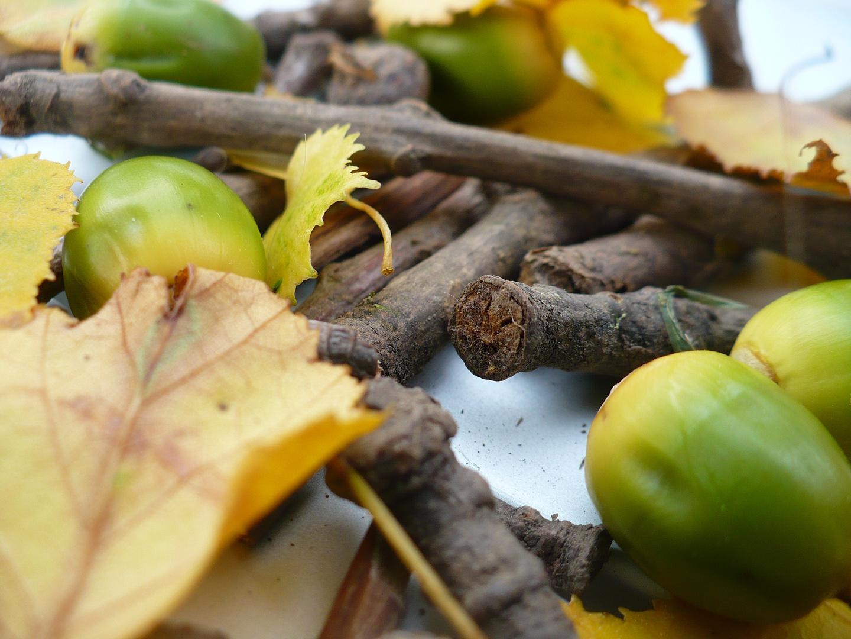 Eicheln, Äste und Blätter