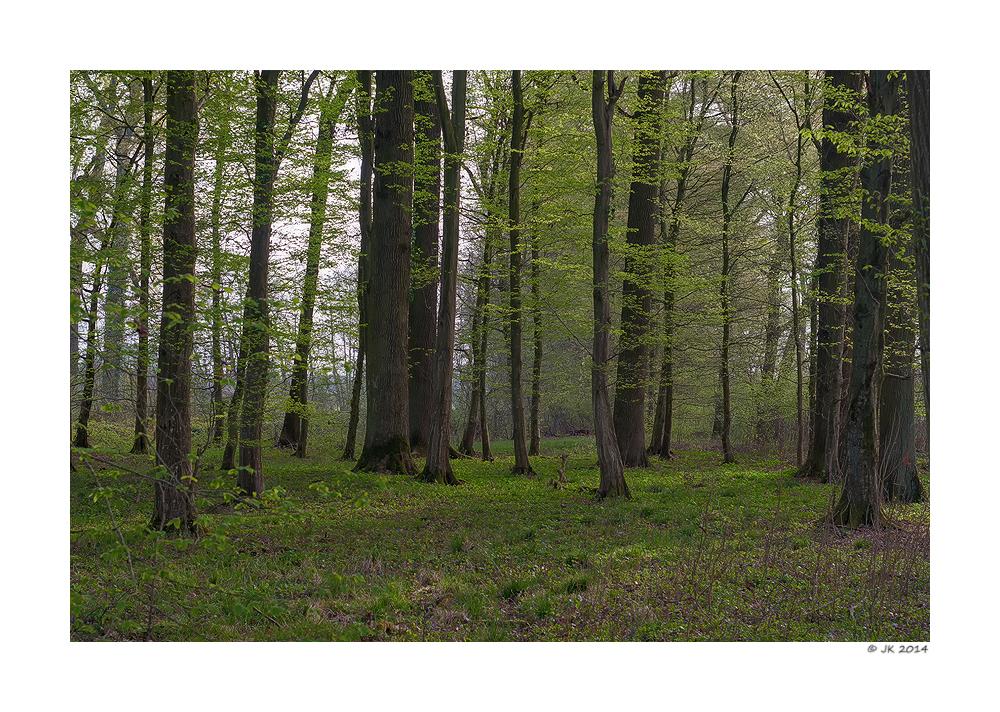 Eichen-Hainbuchenwald