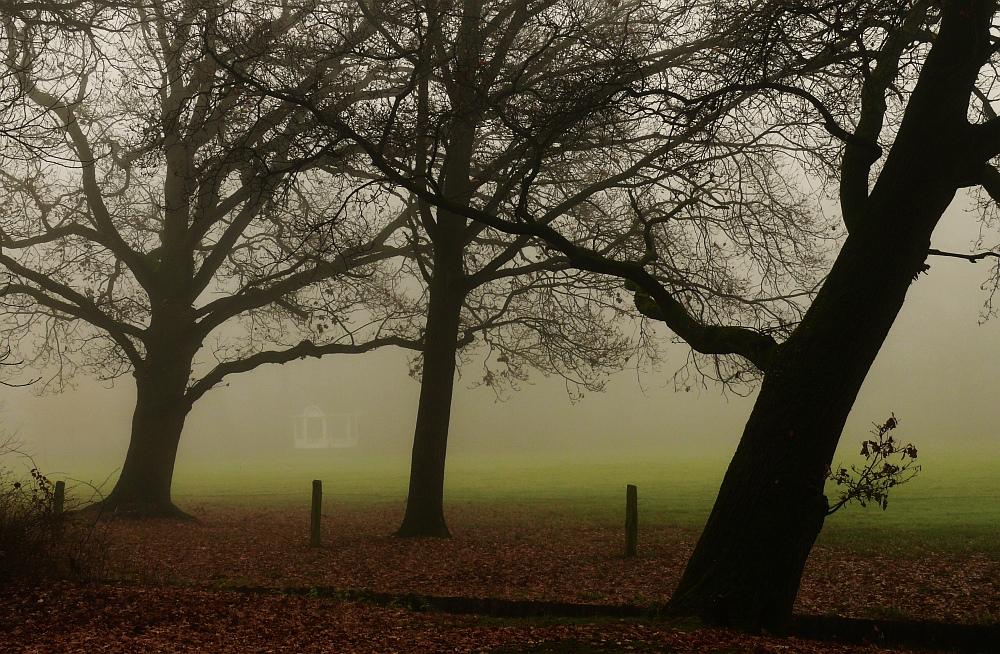 Eichen im Nebel