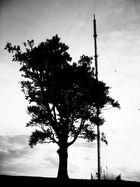 Eichenbaum am Sender