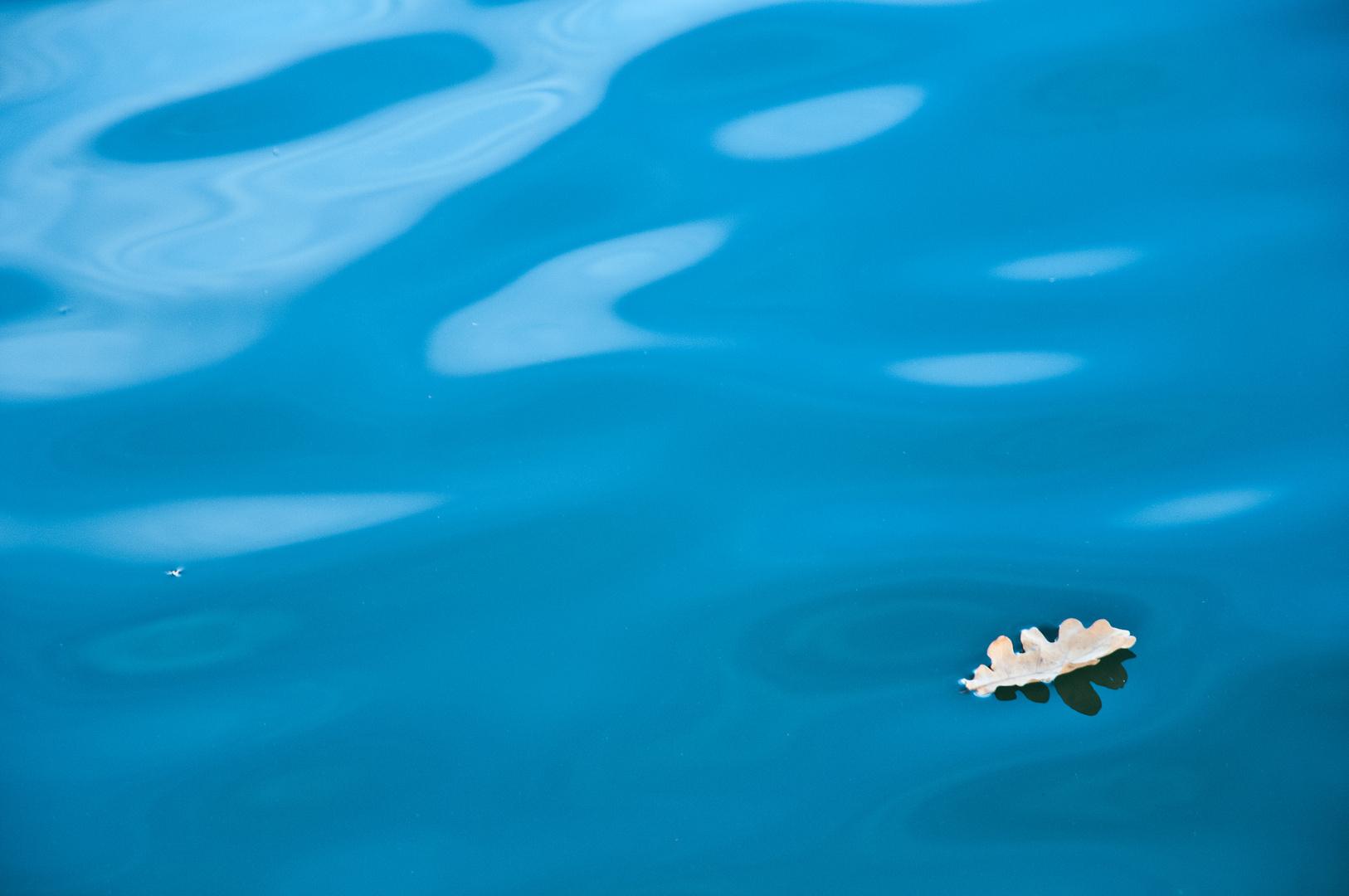 Eichenblatt beim Rückenschwimmen