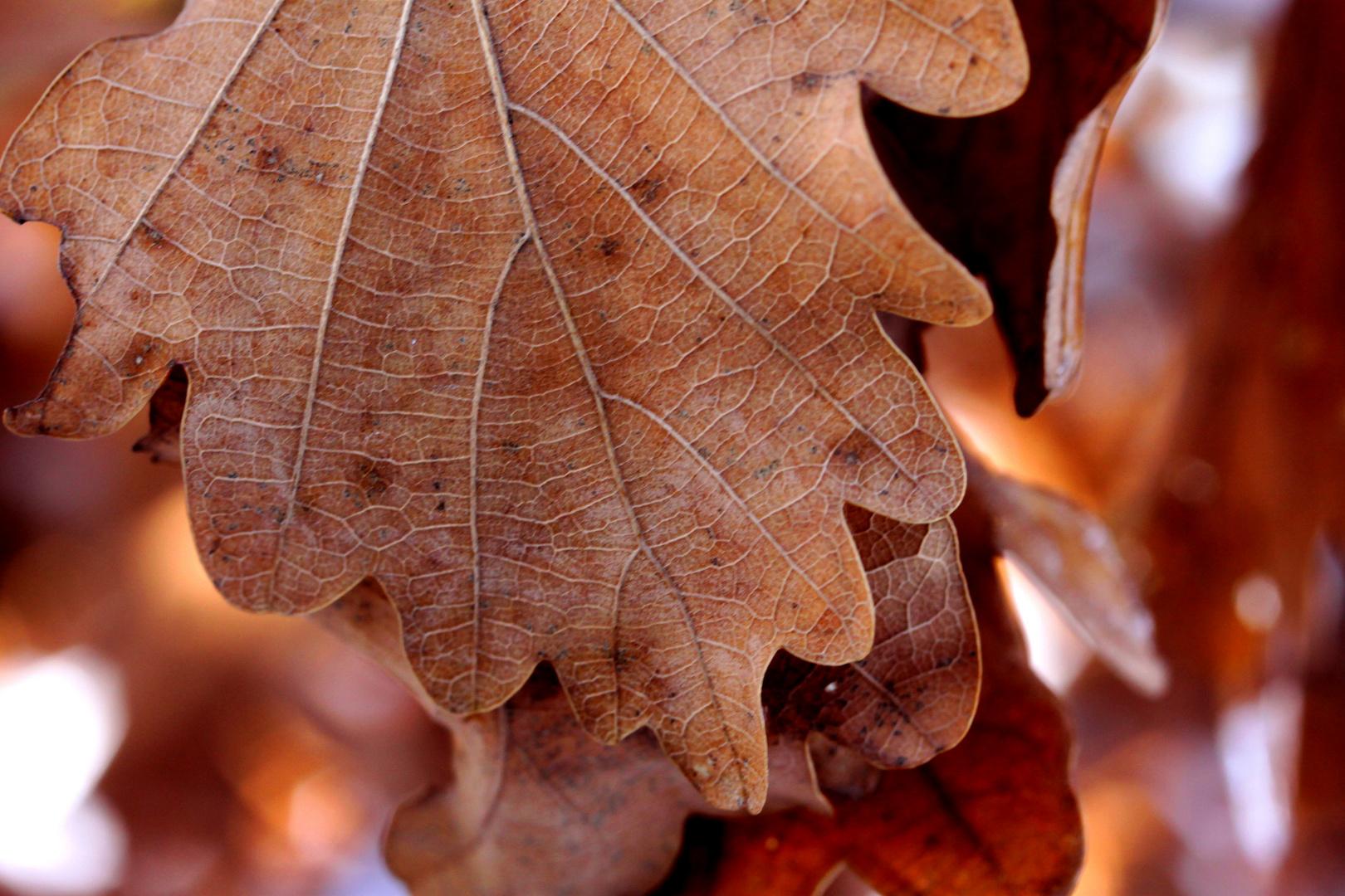 Eichenblattsche Herbststimmung
