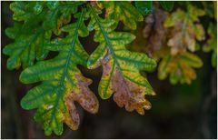 Planzen-Herbst