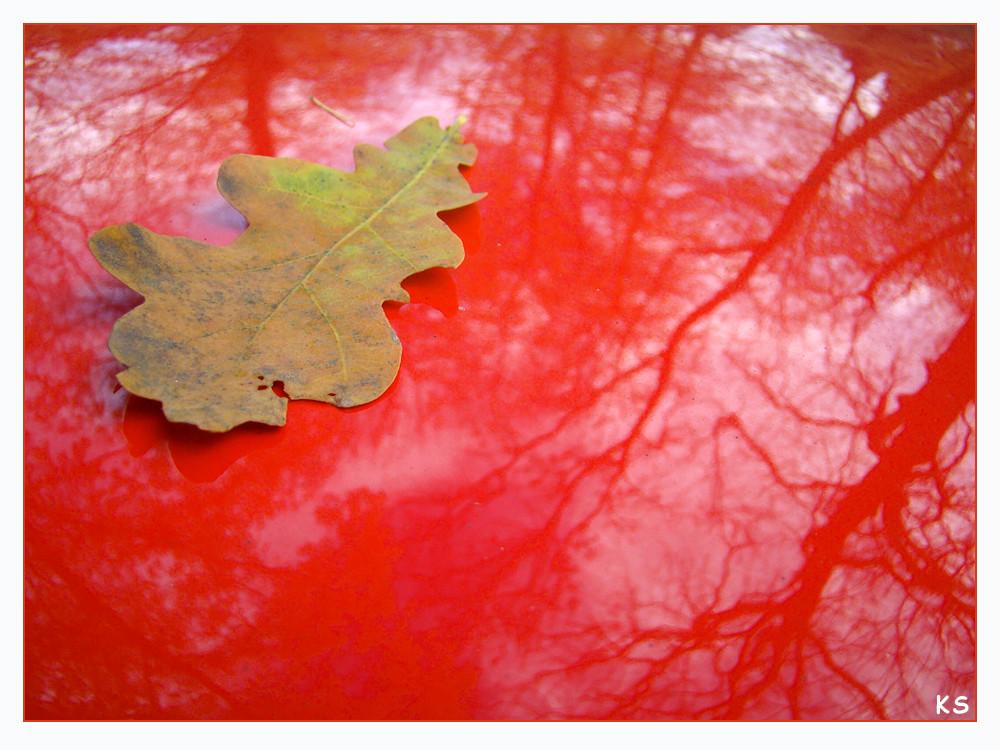 Eichenlaub auf rotem Dach