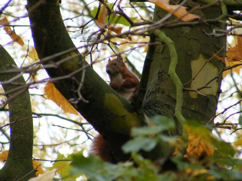 Eichhörnchen ?