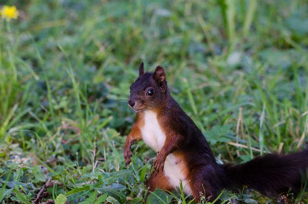 Eichhörnchen 3.......