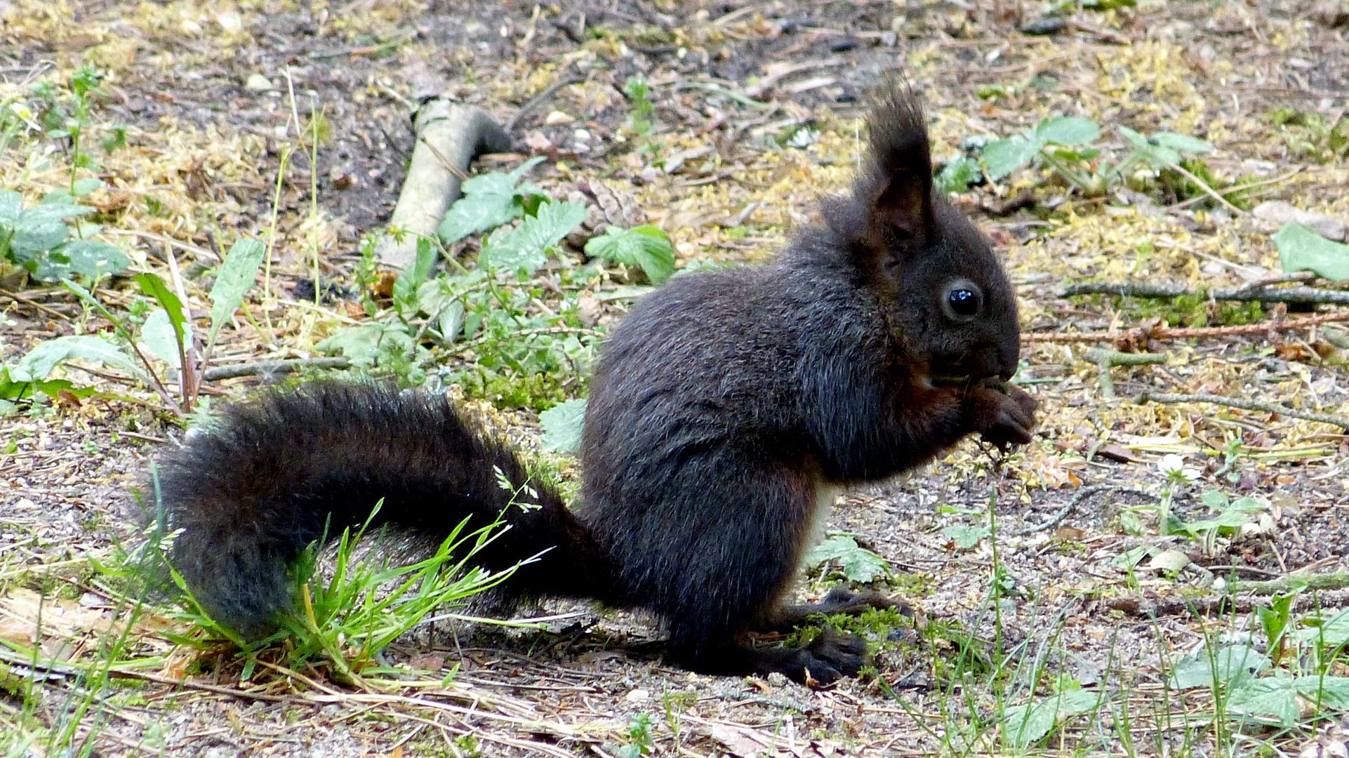 Eichhörnchen 4
