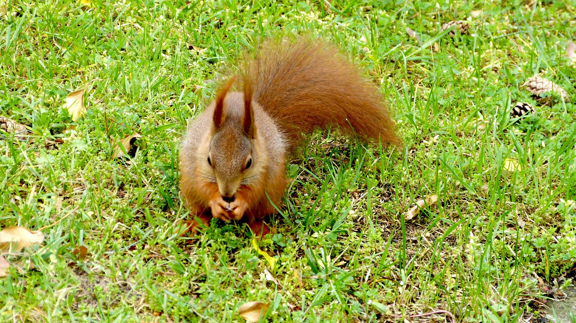 Eichhörnchen 8