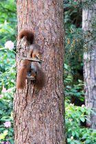 Eichhörnchen-Attentat