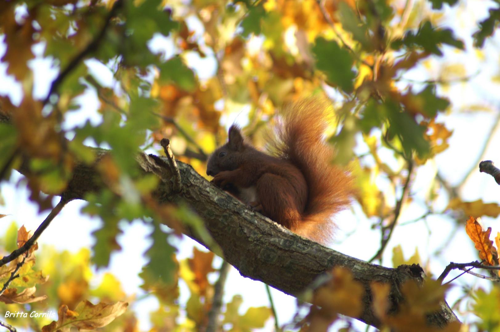 Eichhörnchen...............