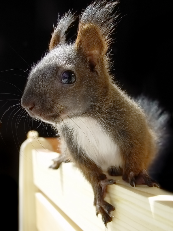 Eichhörnchen Baby Foto & Bild | tiere, tierkinder, animals ...