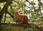 Eichhörnchen beim Brunch
