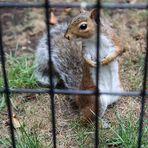 eichhörnchen .