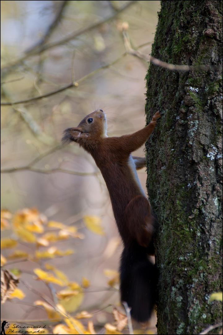 Eichhörnchen :D