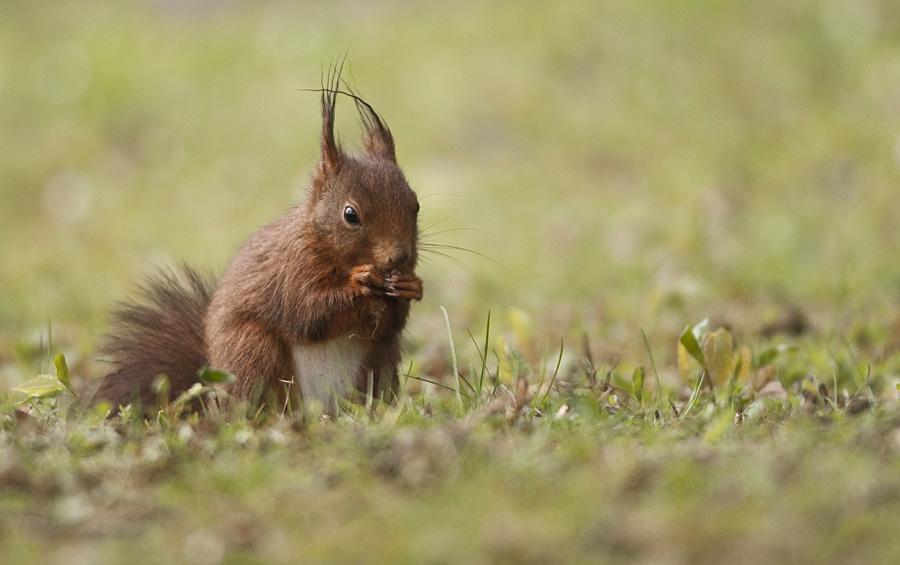 Eichhörnchen die 2.