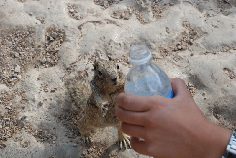 Eichhörnchen haben auch durst