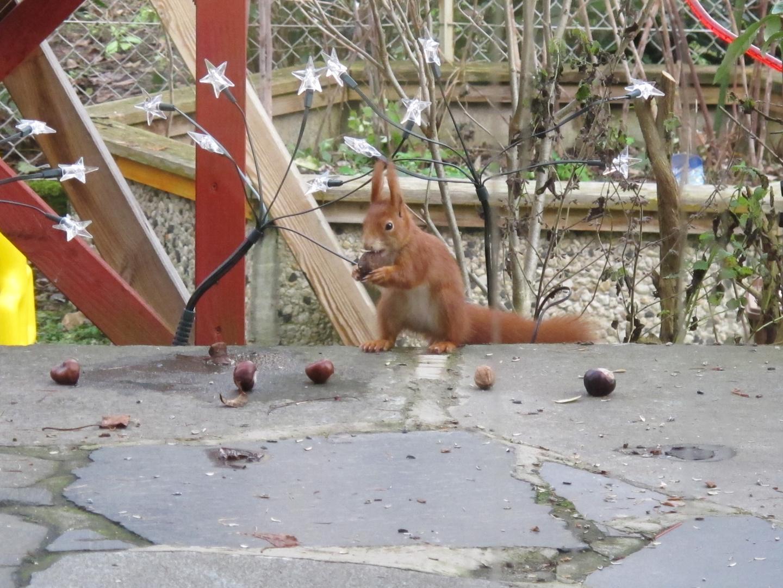 Eichhörnchen hat hunger