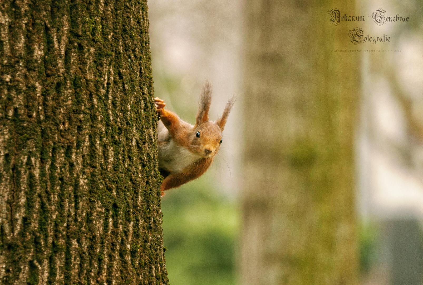 Eichhörnchen im Frühjahr