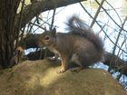 Eichhörnchen im GoldenGate Parc :)