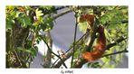 Eichhörnchen im Taunus