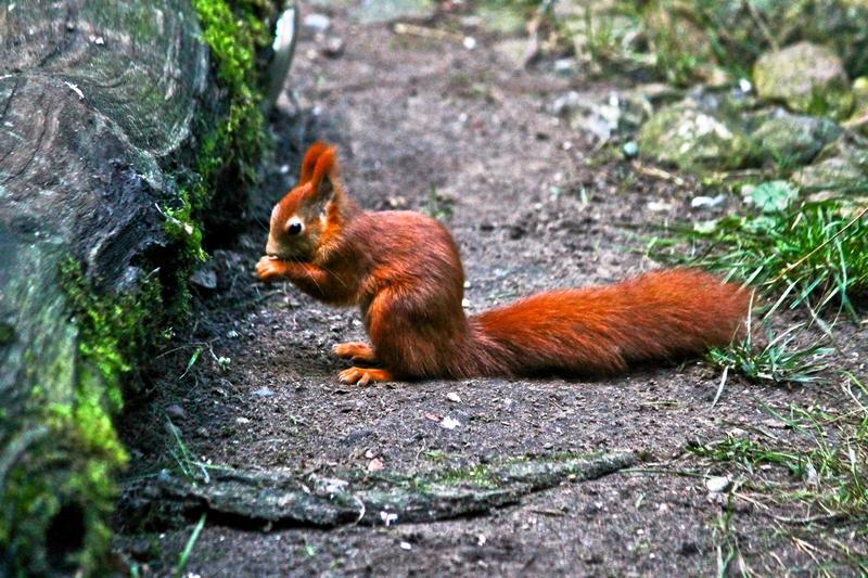 Eichhörnchen, lieb und nett