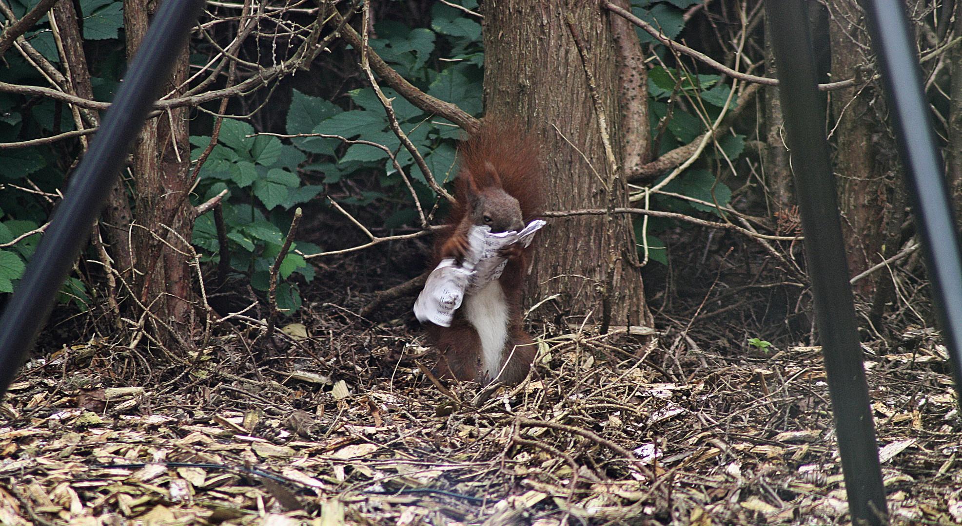 Eichhörnchen liest Zeitung