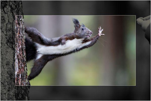 """Eichhörnchen """"mit"""" Haselnuss"""