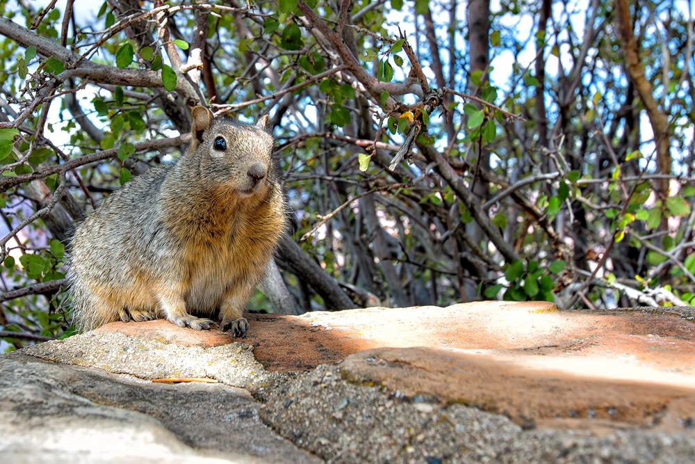 Eichhörnchen oder Eichhorn?