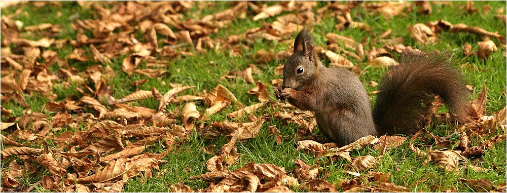 Eichhörnchen Portrait ;)