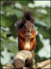 Eichhörnchen-Posing (1)