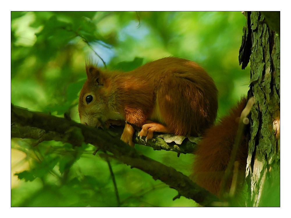 Eichhörnchen sind...