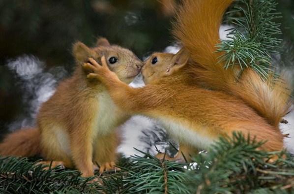 Eichhörnchen - Test