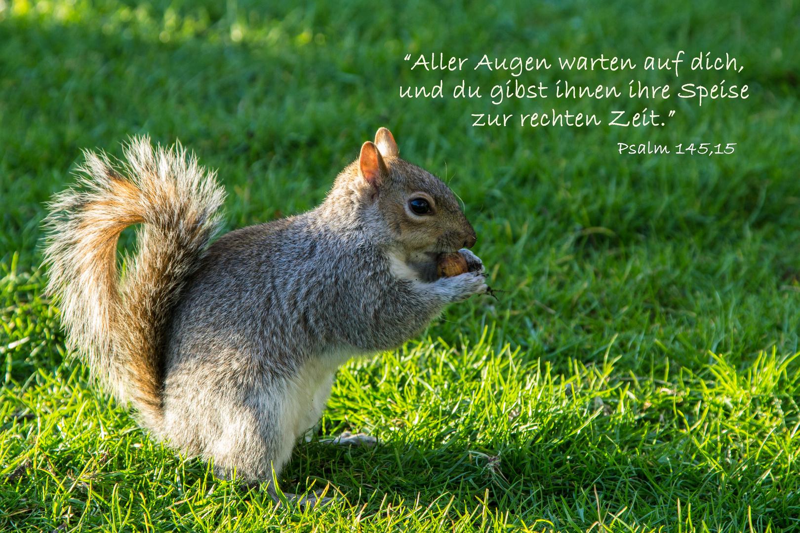 eichhörnchen vom st james´s park spruchkarte psalm 145