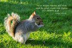 Eichhörnchen vom St. James´s Park, Spruchkarte Psalm 145,15
