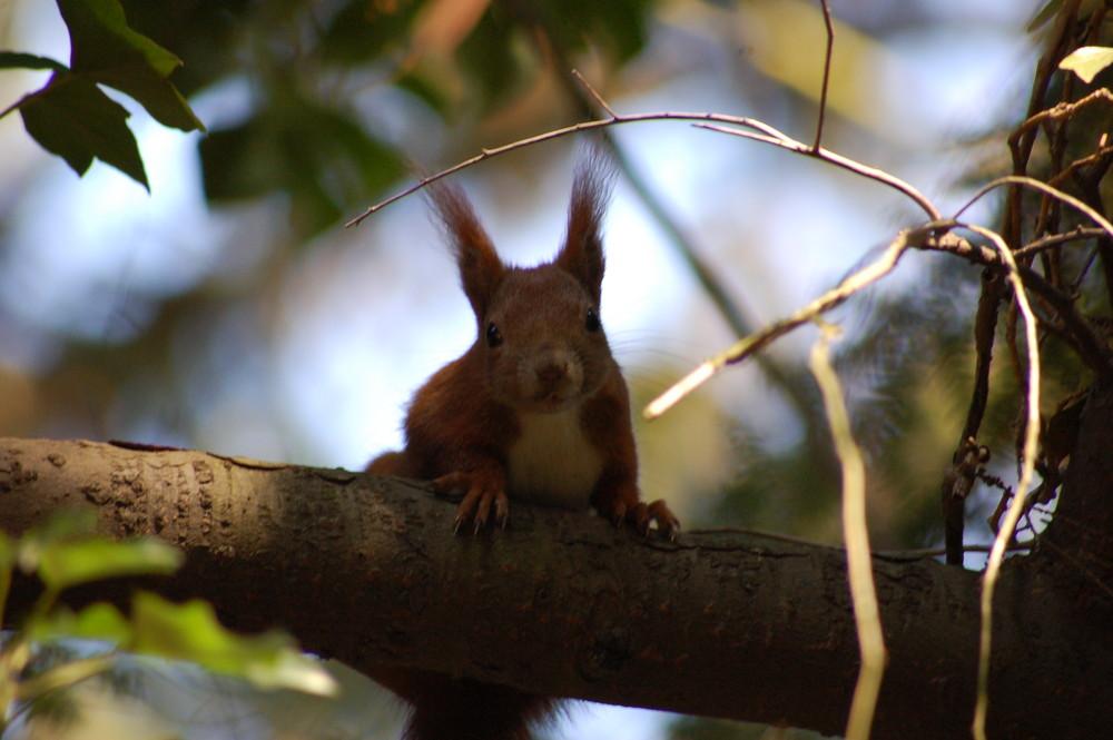 Eichhörnchen, was kuckst du