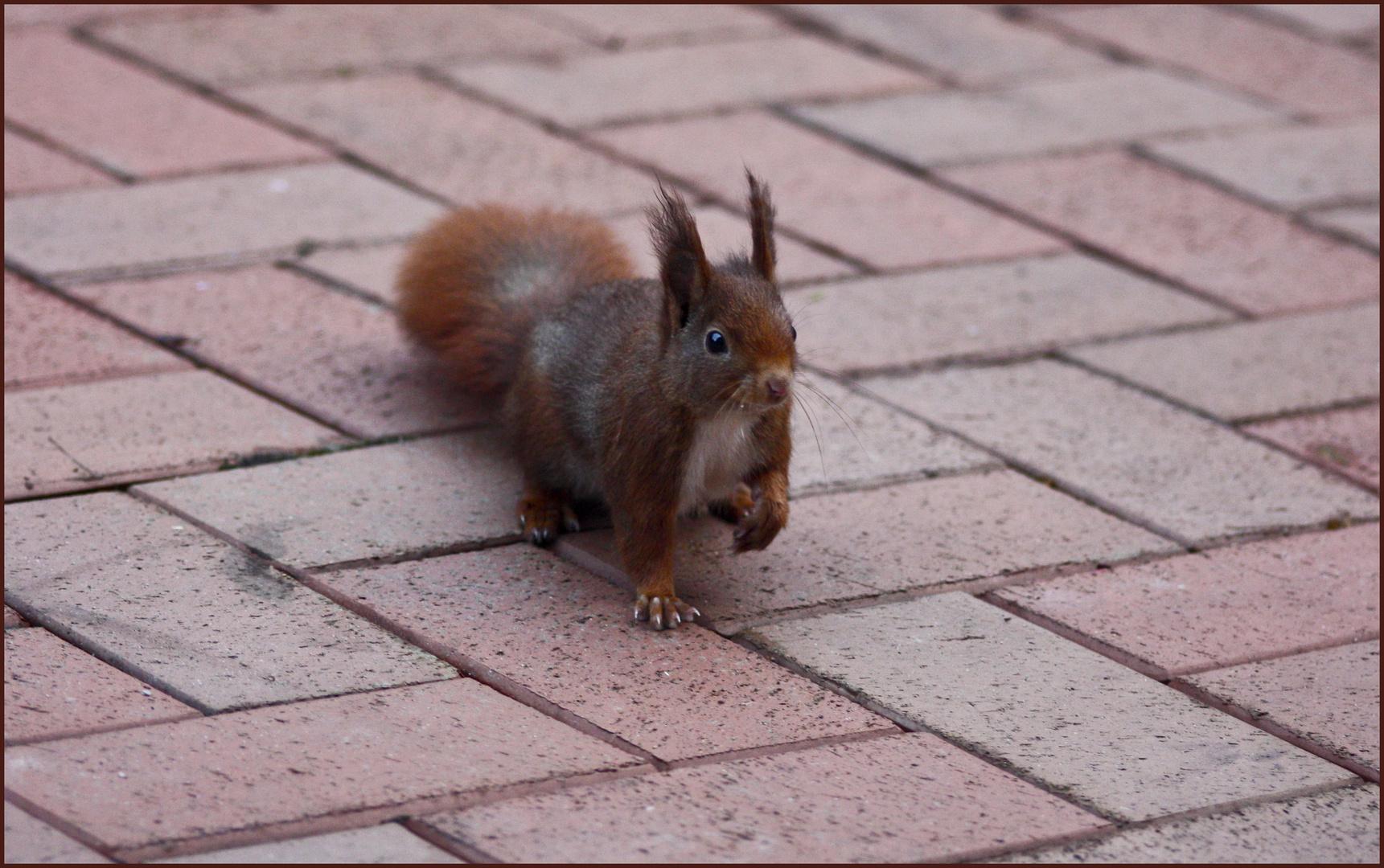 Eichhörnchenbesuch!