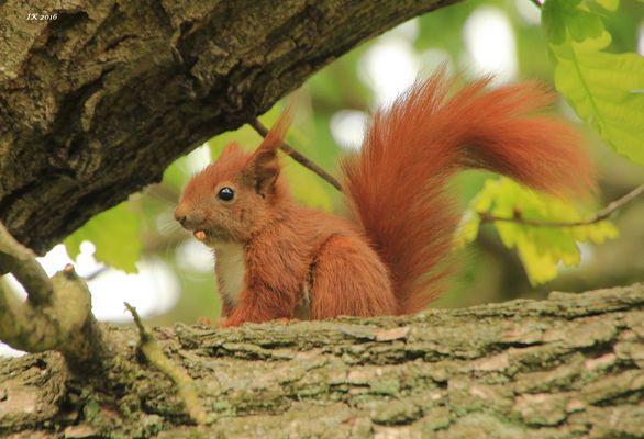 Eichhörnchenkind 2