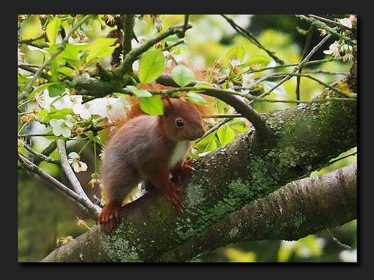 Eichhörnchenkind