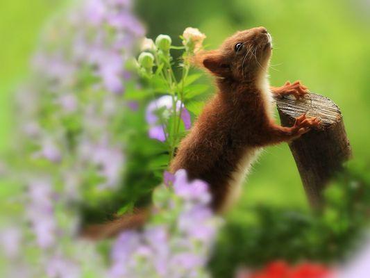 *Eichhörnchenkind in rosa violetter Blütenpracht*