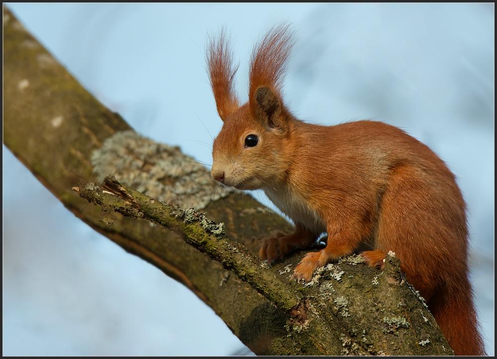 ~Eichhörnchenportrait~
