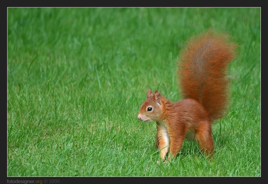 « Eichörnchen... »