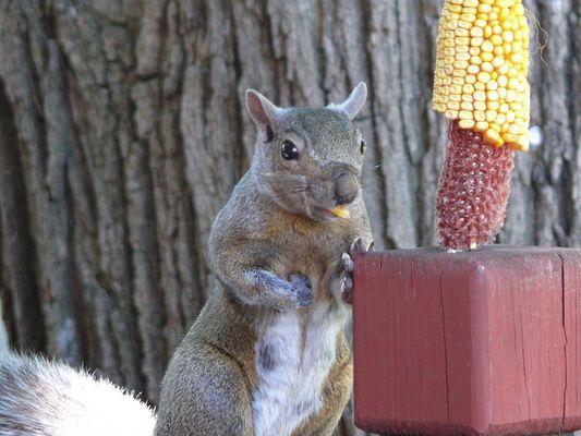 Eichörnchen im Garten_Das zweite