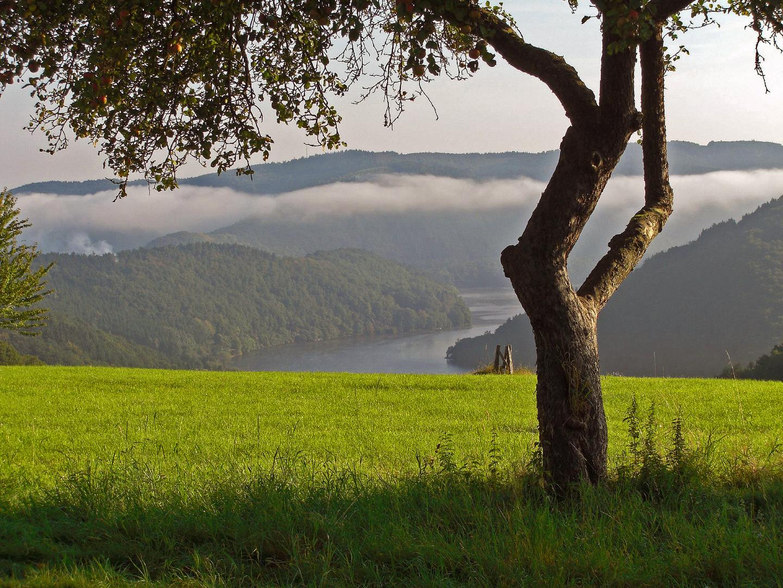 Eifel 05
