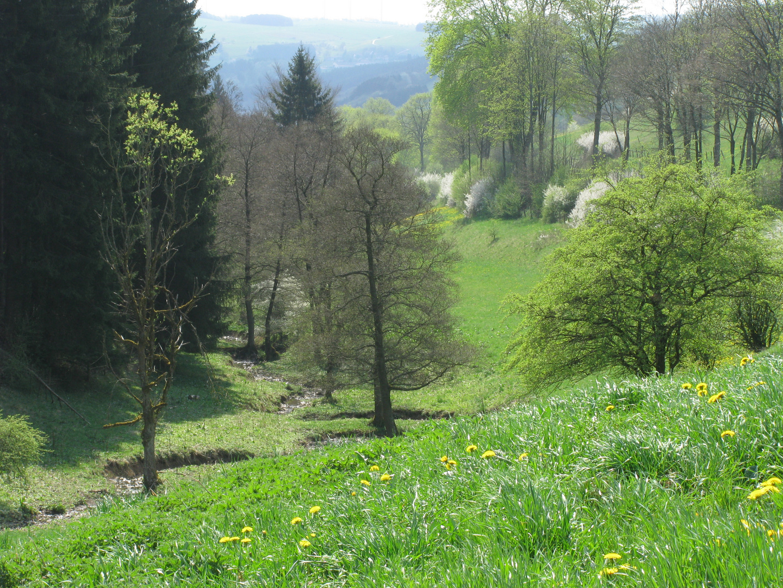 Eifel 2011 (2)
