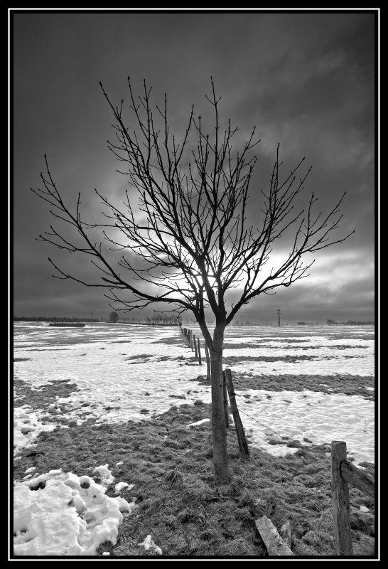 Eifel-Winter (04152)