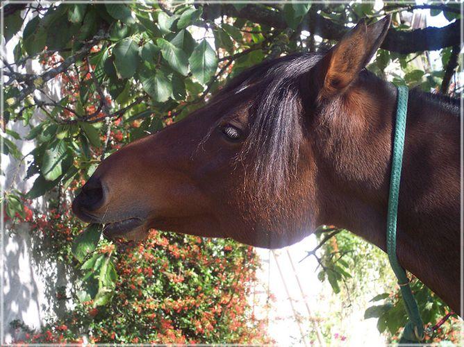Eifel zu Pferd 2004 - Knabberpause