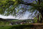 Eifeldörfer - manchmal passen sie unter einen Baum