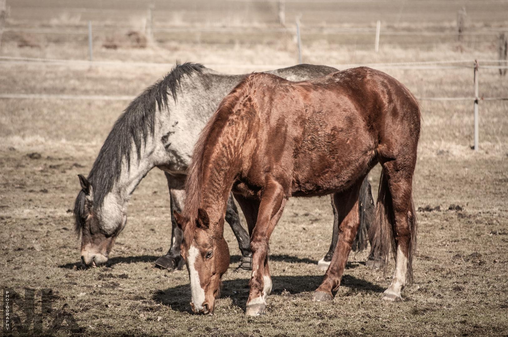 Eigentlich bin ich ja kein großer Pferde-Freund...
