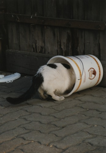 Eimer-Katze, Katzen-Eimer?