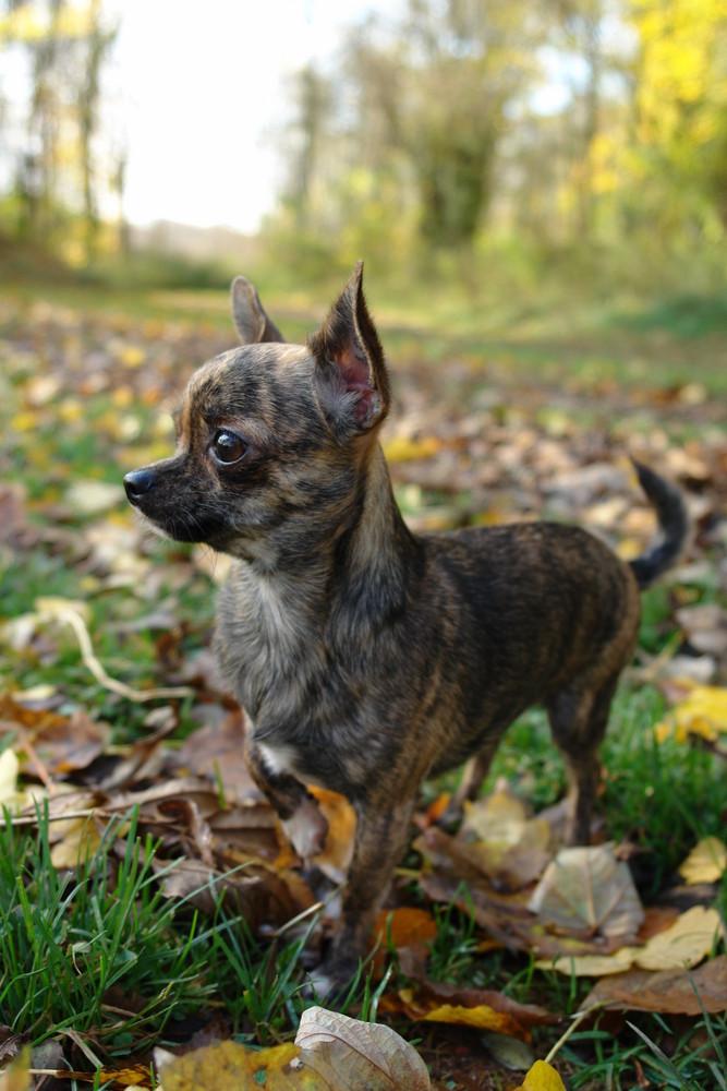 Ein 1 A Vorstehhund